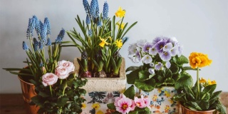 Blooming houseplants to brighten your home