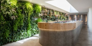 Biophilic Elements In Office Spaces