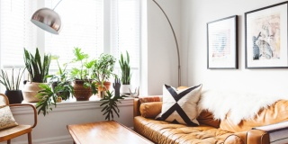 16 Indoor plants for your home